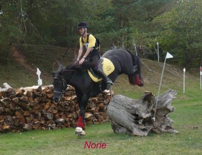 Norie